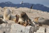 Navegación Canal Beagle Isla de los Lobos