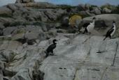 Navegación Canal Beagle Pingüinera